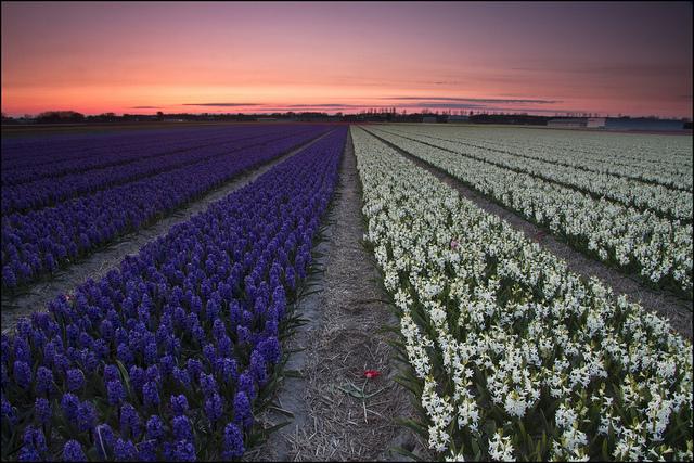 Netherlands (2)
